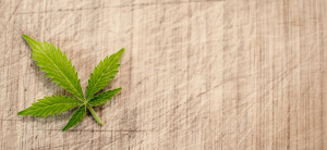 medical marijuana update icon marijuana leaf on canvas